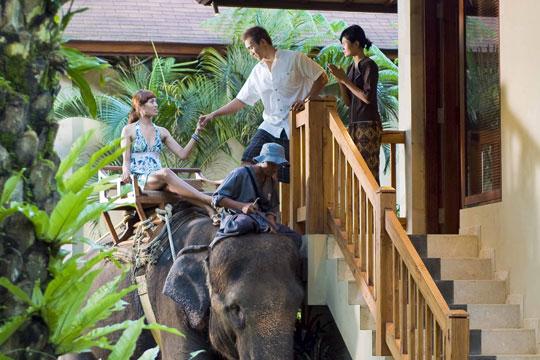 象に乗って朝食会場へ